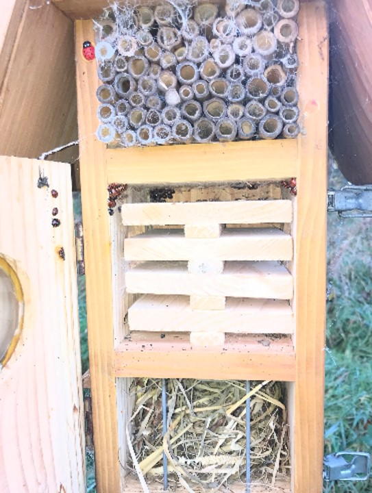 Insect hotel providing shelter for overwintering ladybirds