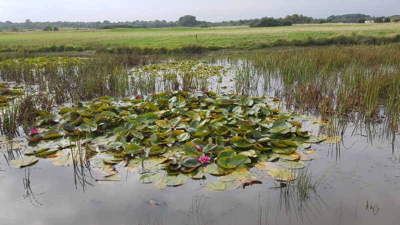 Drawdown zones have been created around the ponds on Buddon Links for aquatic invertebrates
